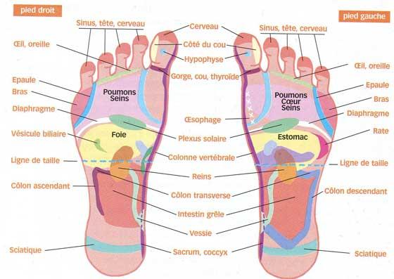 R flexologie plantaire am lie bien etre lyon les mains for Douleur interieur pied droit